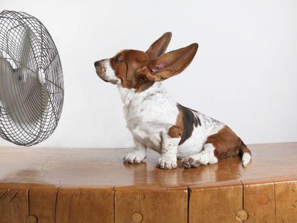 Consejos Para Prevenir Un Golpe De Calor En Tu Mascota.
