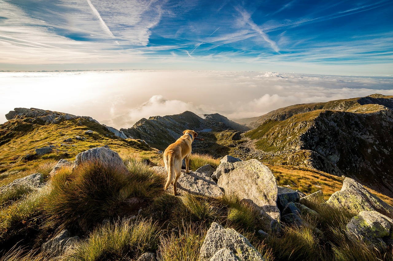 Tips To Enjoy Hiking With Your Dog