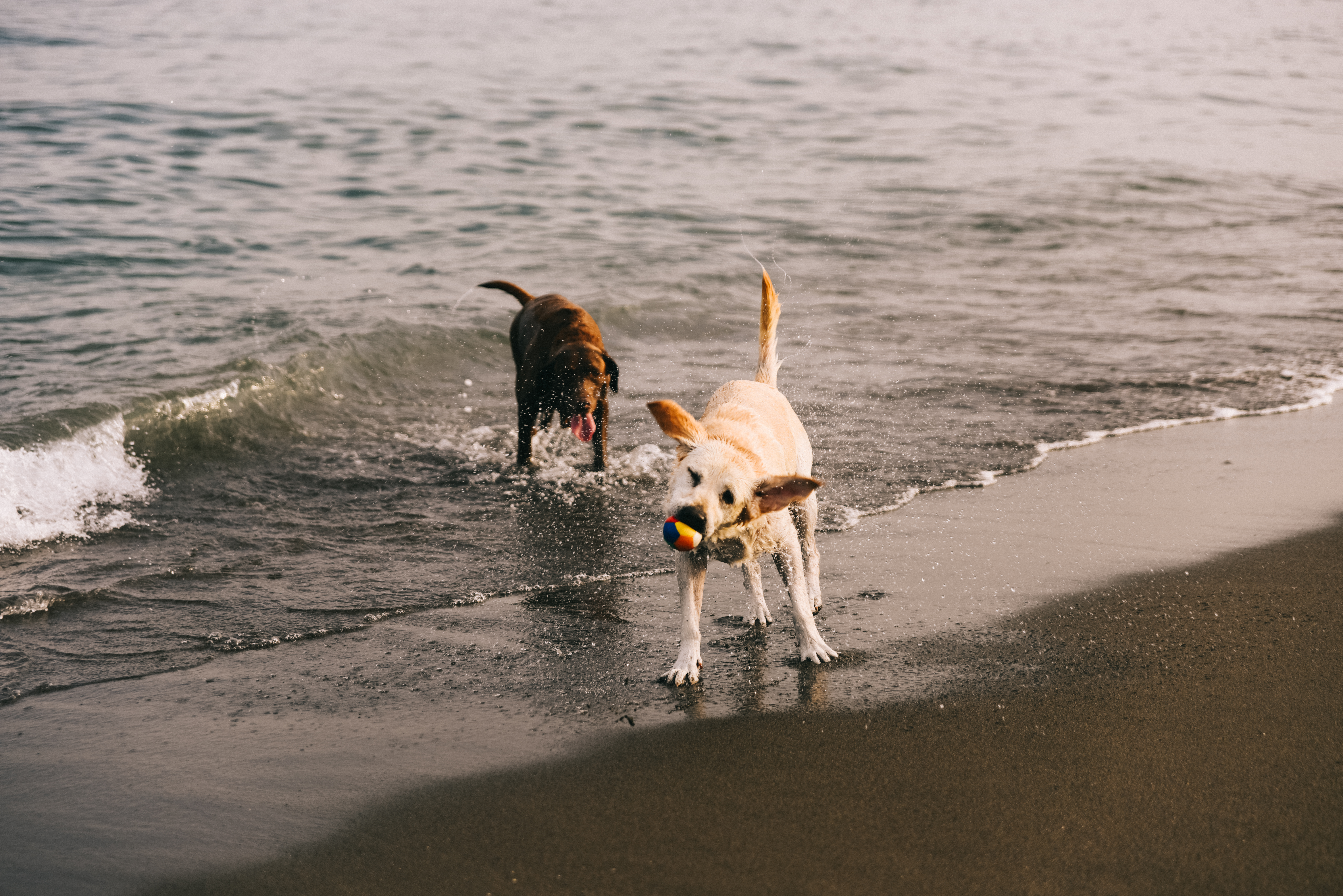 TIPS FOR TAKING YOUR DOG TO THE BEACH.