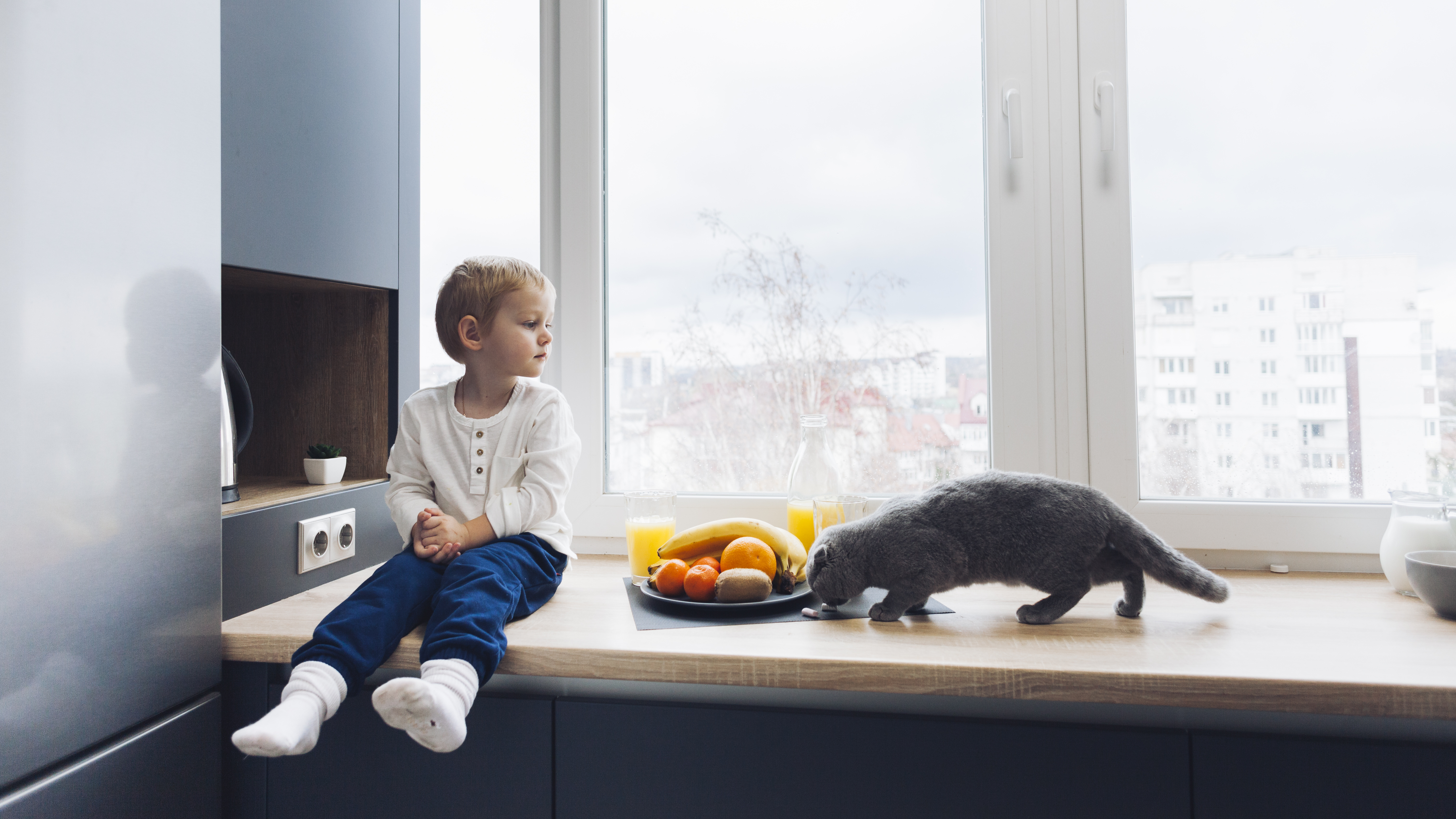 THE MOST ADEQUATE FRUITS AND VEGETABLE FOR CATS